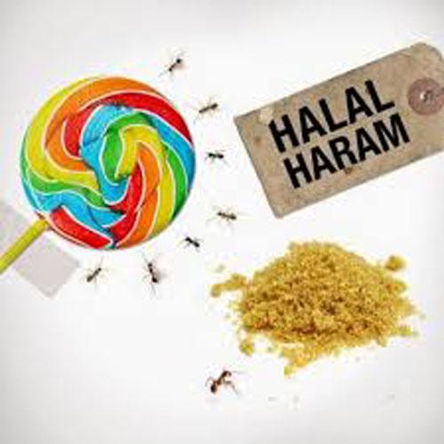 Makanan Halal Check Porsi Haji App