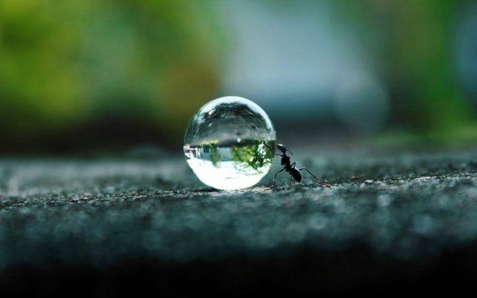 Hukum Membunuh Semut dengan Air Panas
