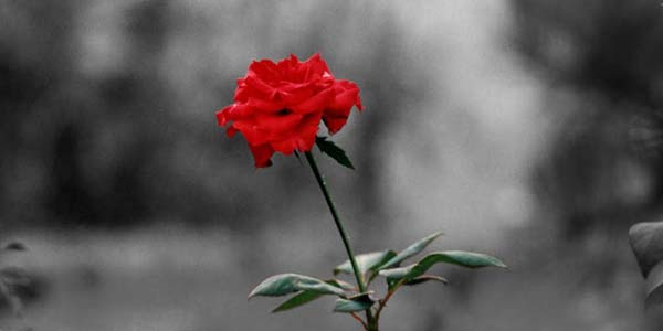 Satu Bunga Mengalahkan Nilai Seribu Bunga
