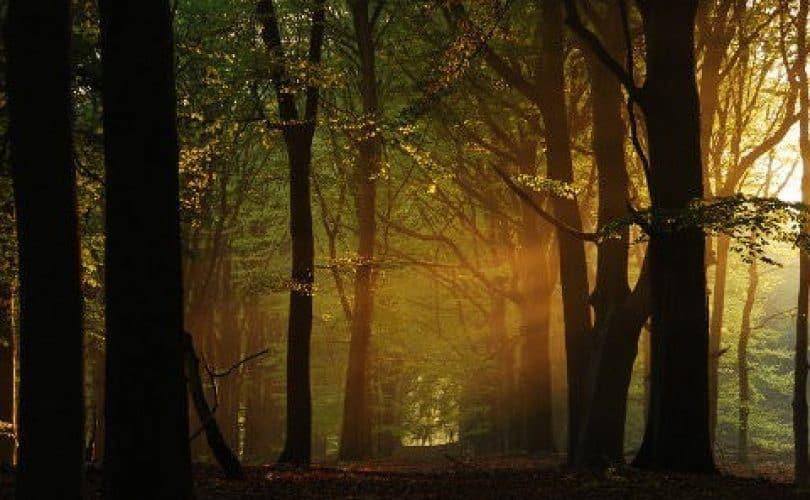 """Sunnah Yang Terlupakan, Ucapan """"Innal 'Aisya, 'Aisyul Akhirah"""""""